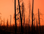 Red Sunset Forest Fire Damage